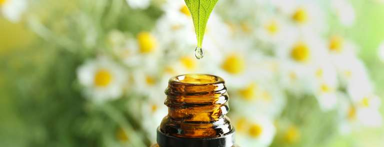 drop of chamomile essential oil from leaf to bottle with background of chamomile flowers