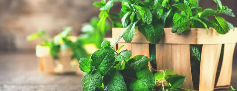 peppermint leaves in a basket