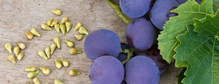 Grapes and grape seeds