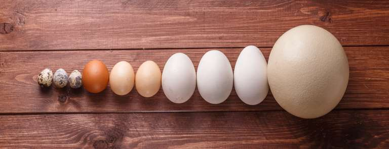assortment of different egg types