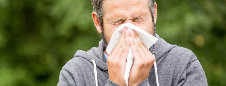 hay fever causes