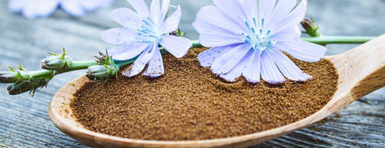 A spoon with powder chicory coffee powder with blue flowers.